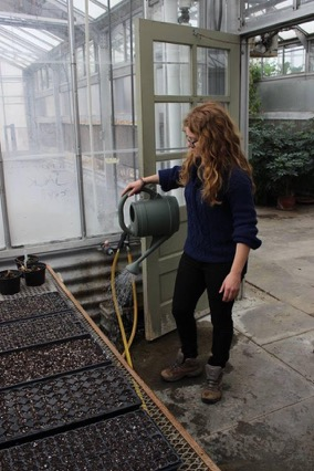 Lauren Wulker watering plants in the greenhouse | Photo by Carder Gilbert